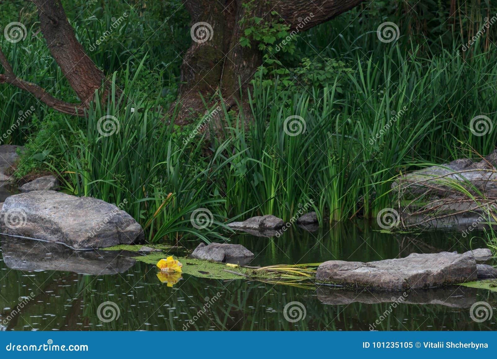 Recursos hídricos que é poluído com vários lixo e lixo, rios poluídos