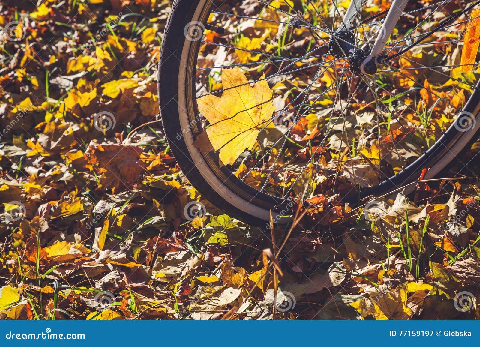 Recyclage en plan rapproché de parc d automne