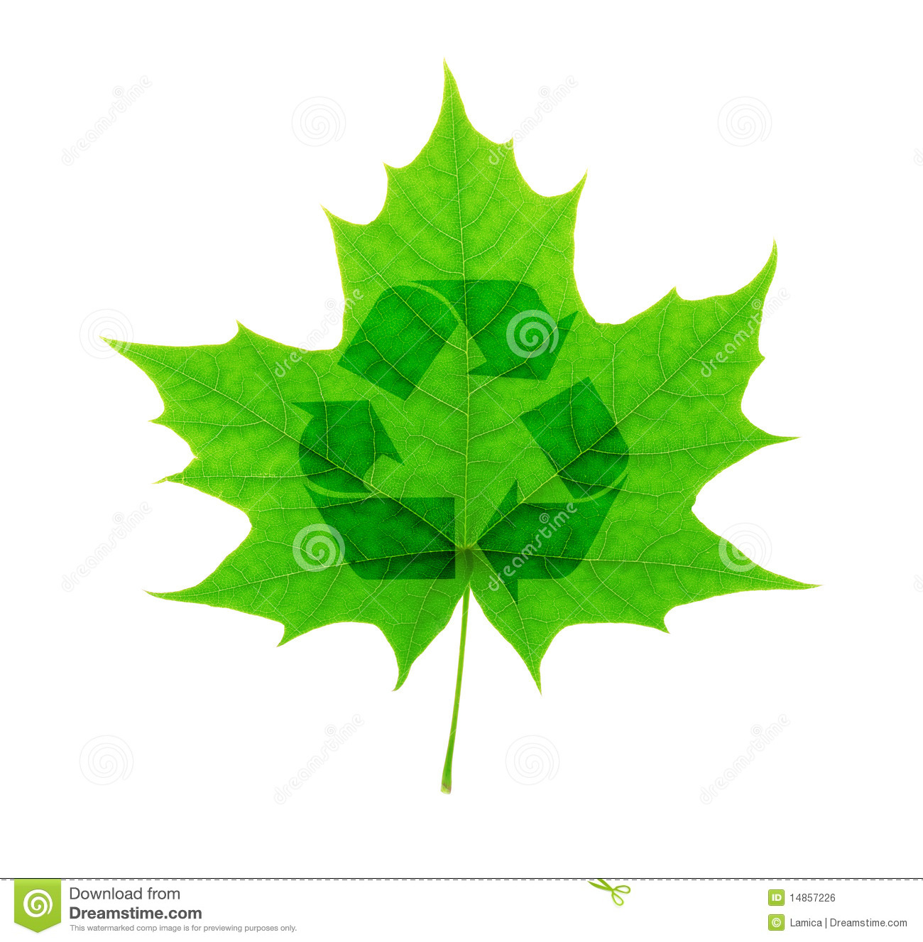 Recycle symbol over green maple leaf