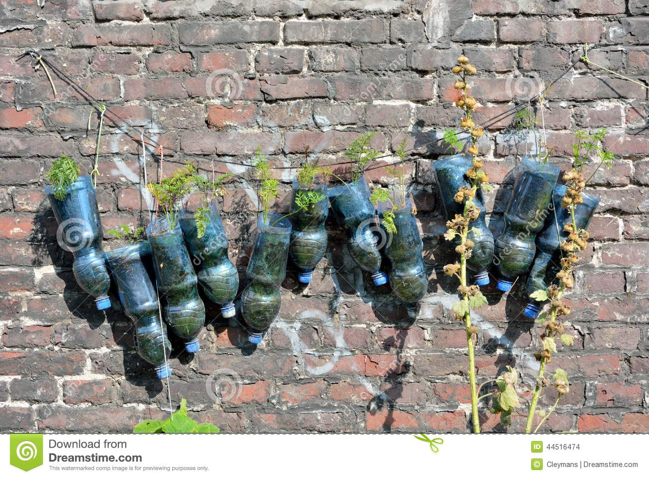 Recycled plastic bottles used as a planter stock photo for Recycled wall