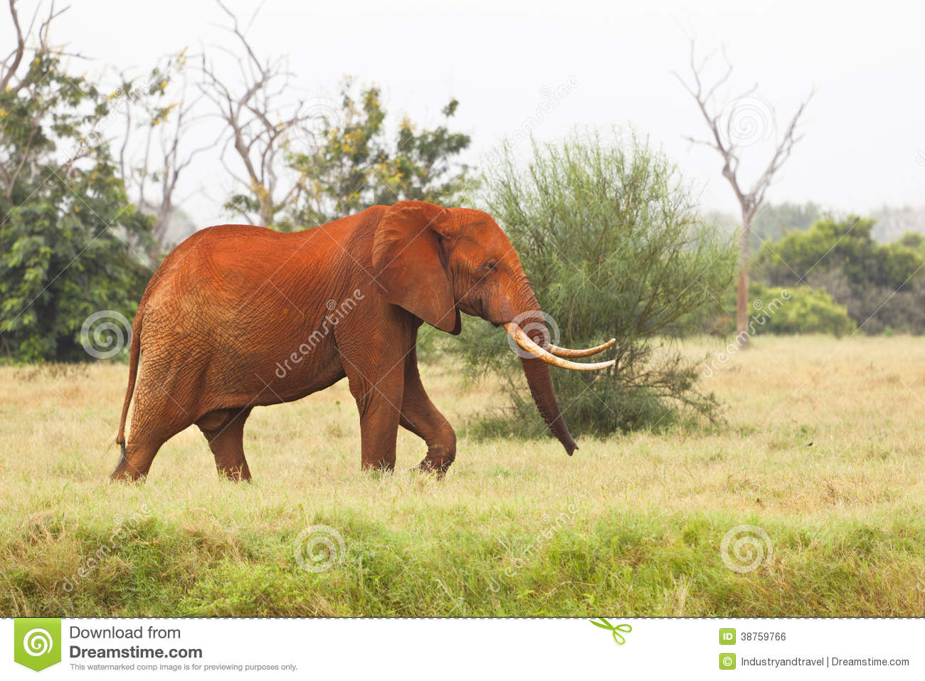 red traditional elephant - photo #20