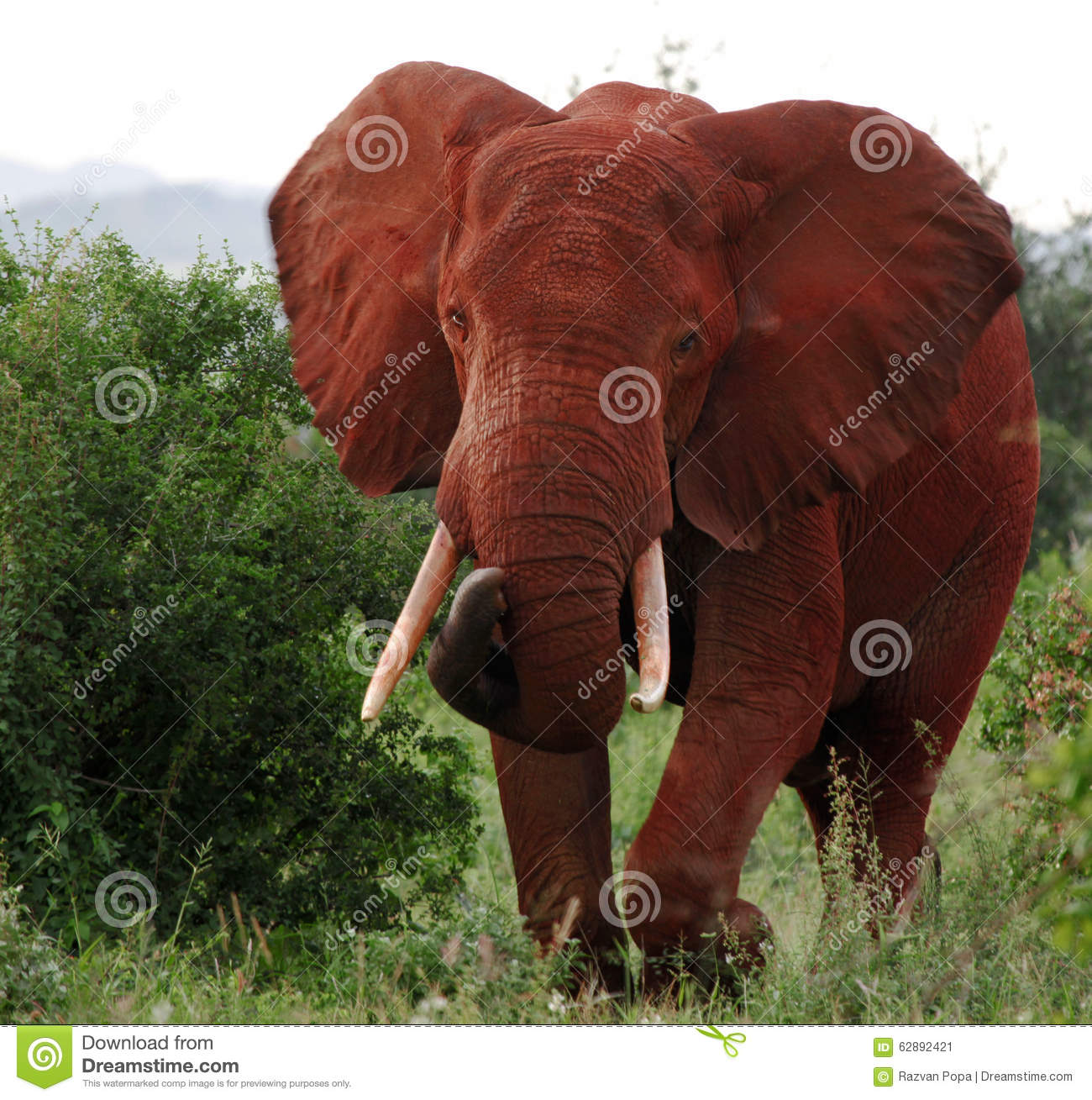 red traditional elephant - photo #6