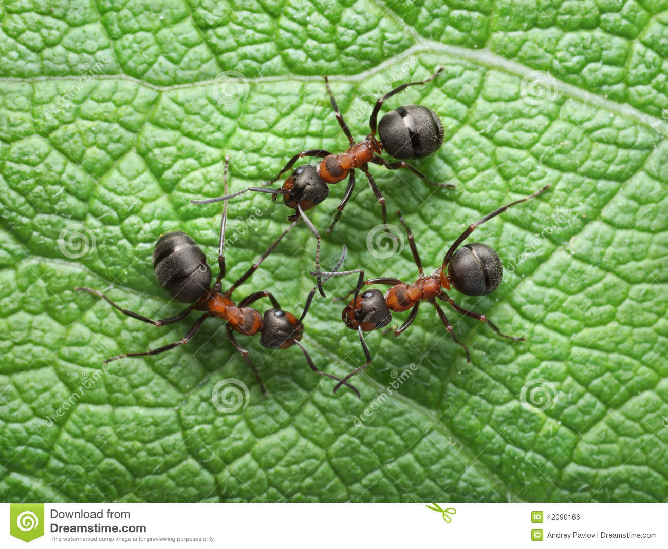 red ants connection with antennas stock photo image 42090166. Black Bedroom Furniture Sets. Home Design Ideas