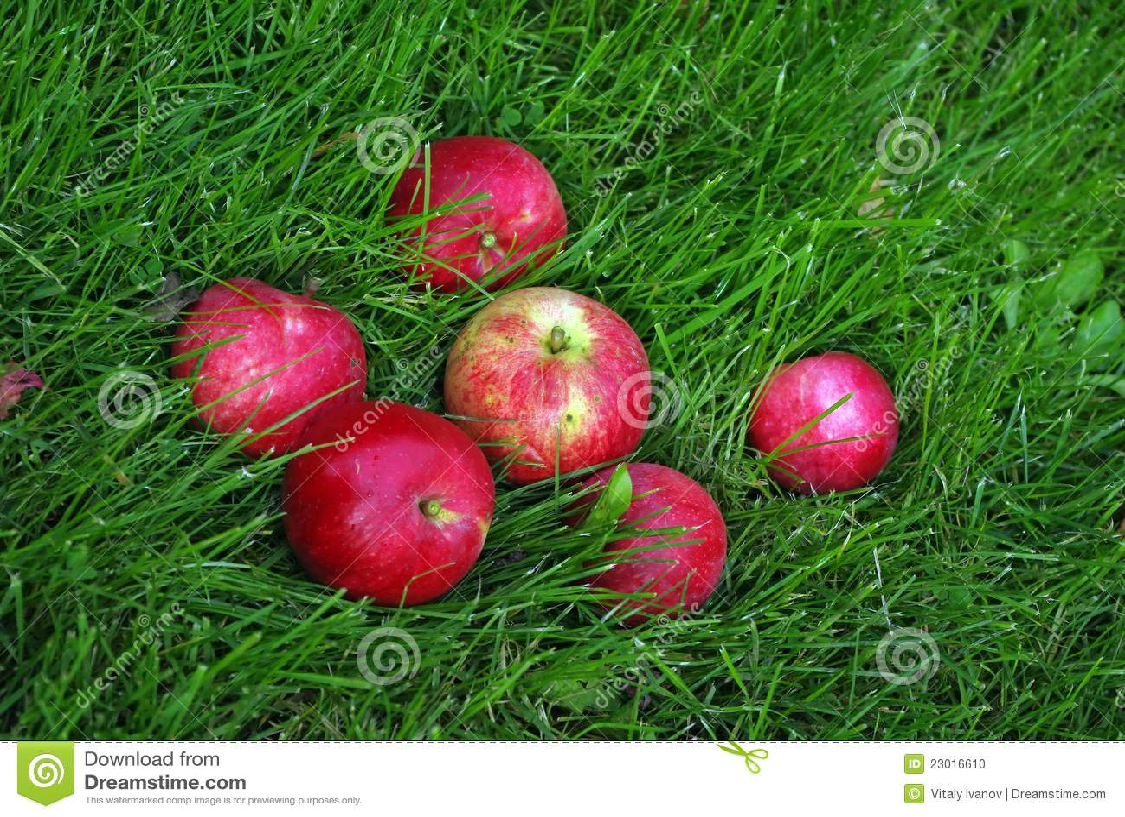 apple fruit background grass - photo #39