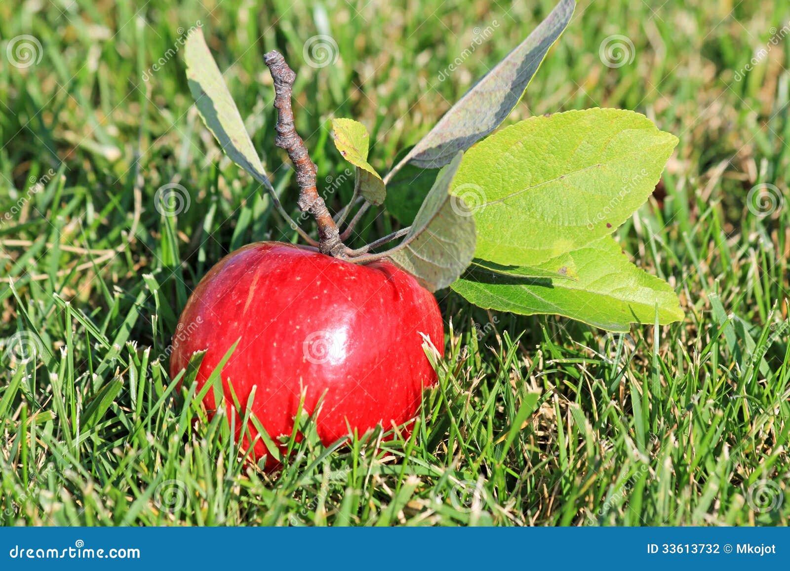 apple fruit background grass - photo #38