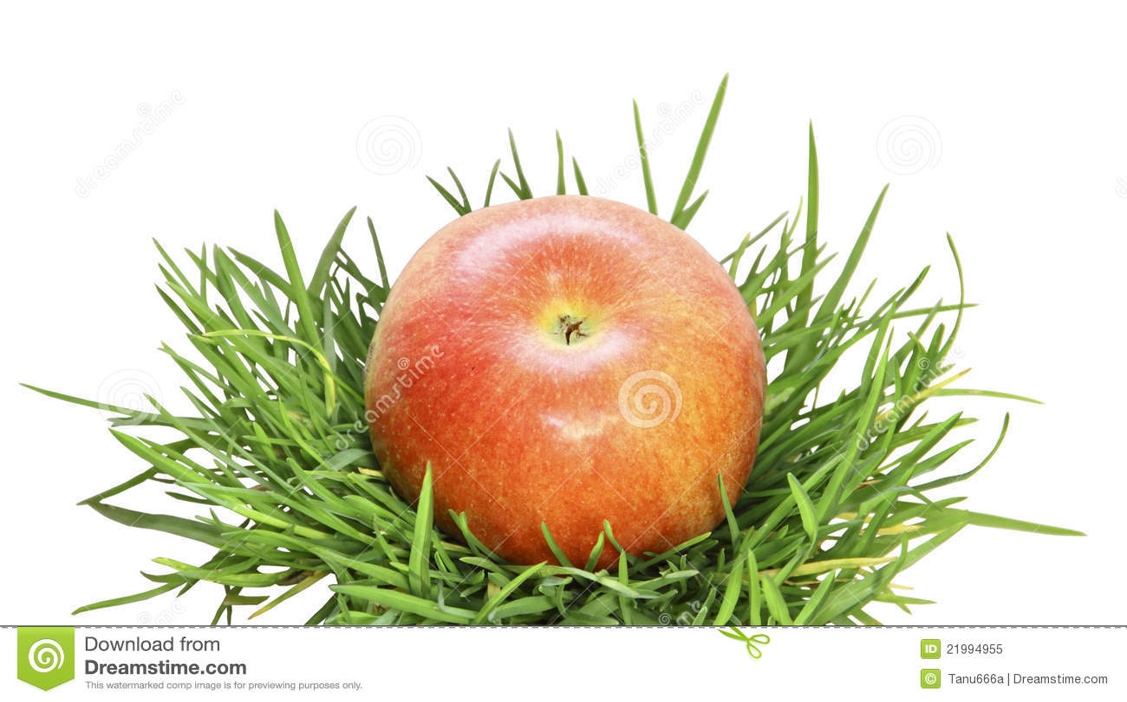apple fruit background grass - photo #16
