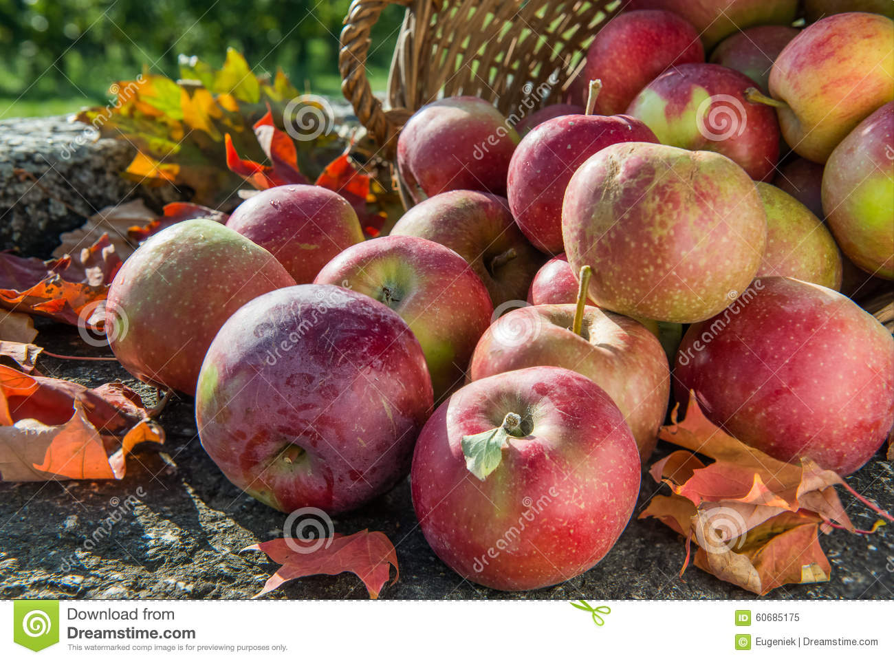 Red apples in a basket with autumn leaves. Side view