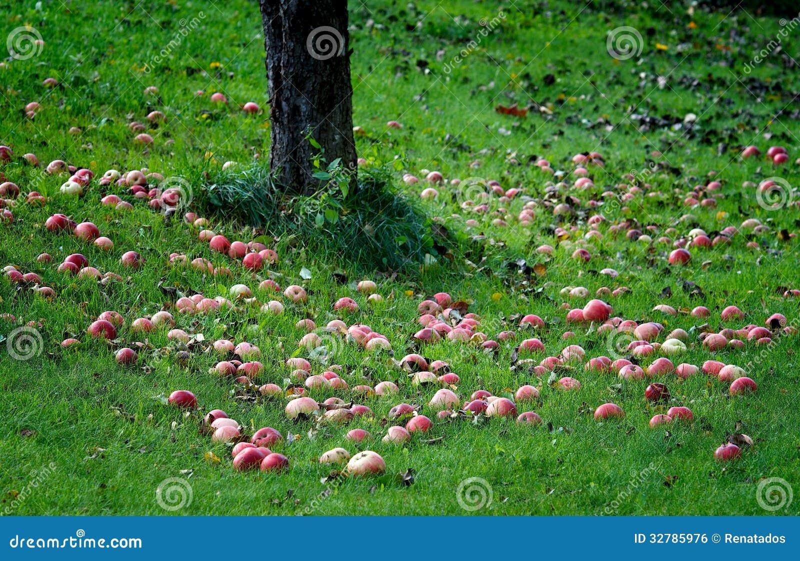 apple fruit background grass - photo #35