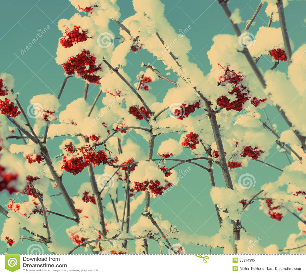 Red Ash Berry Under Snow Vintage Retro Style Royalty