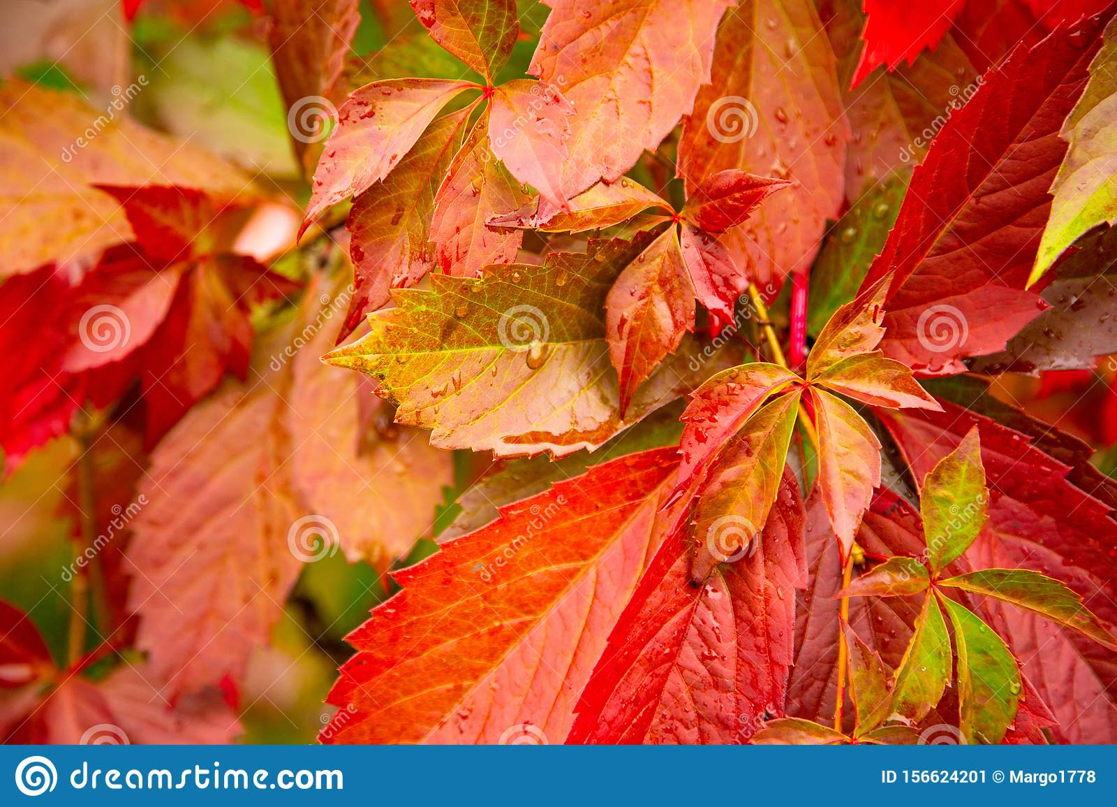 Red Autumn Leaves Background Stock Image Image Of Orange Harvest 156624201