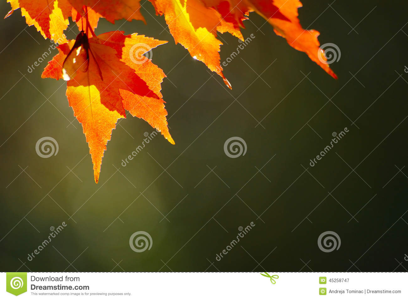 Download Red Autumn Leaves stock image. Image of blurred, tree - 45258747