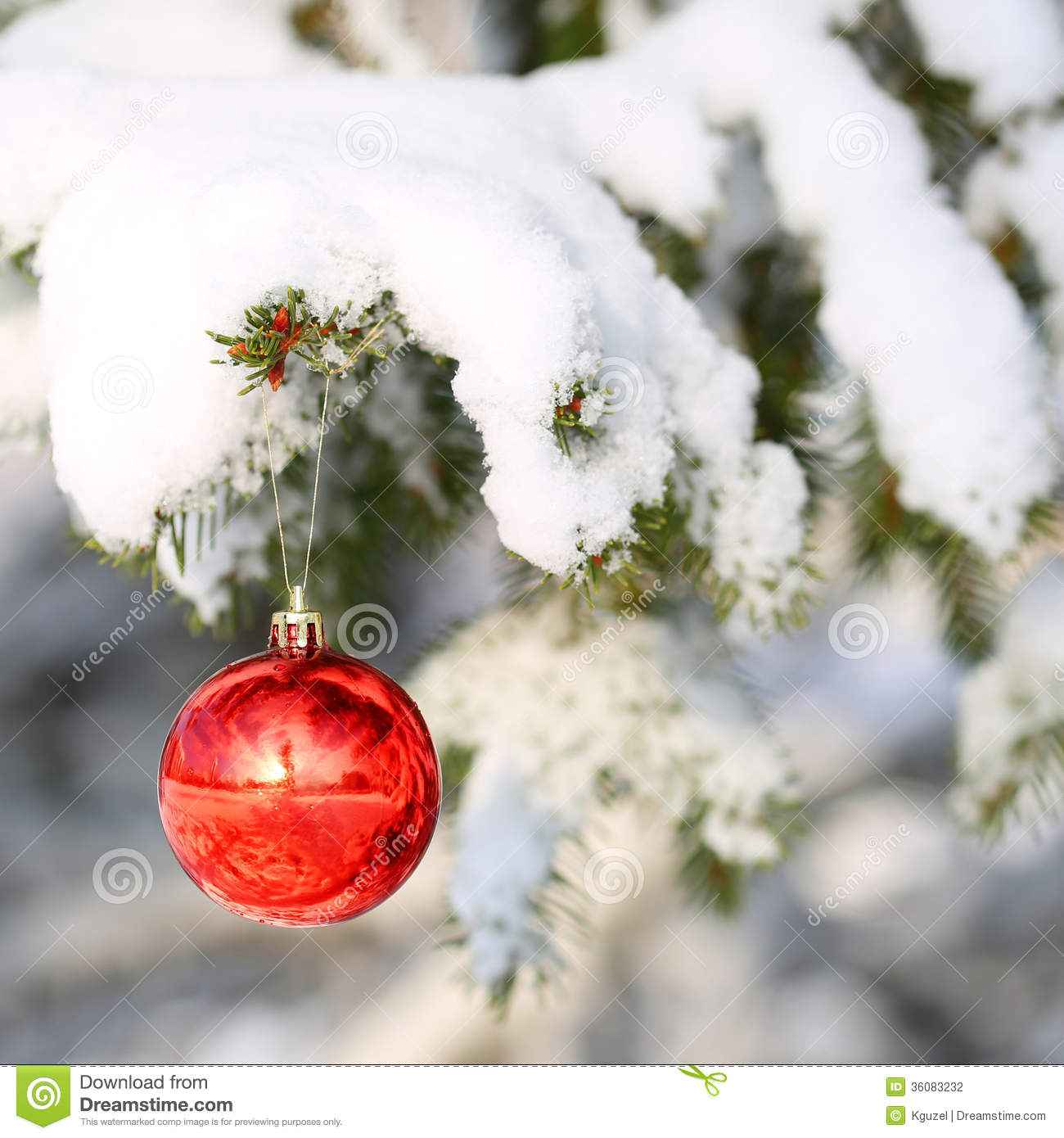 red ball on christmas tree branch covered with snow. Black Bedroom Furniture Sets. Home Design Ideas