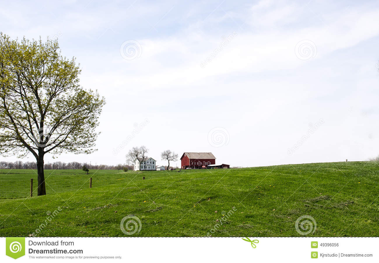 Cow on green pasture with red barn with grain silo royalty free stock - Royalty Free Stock Photo Background Barn Farm Green House Red