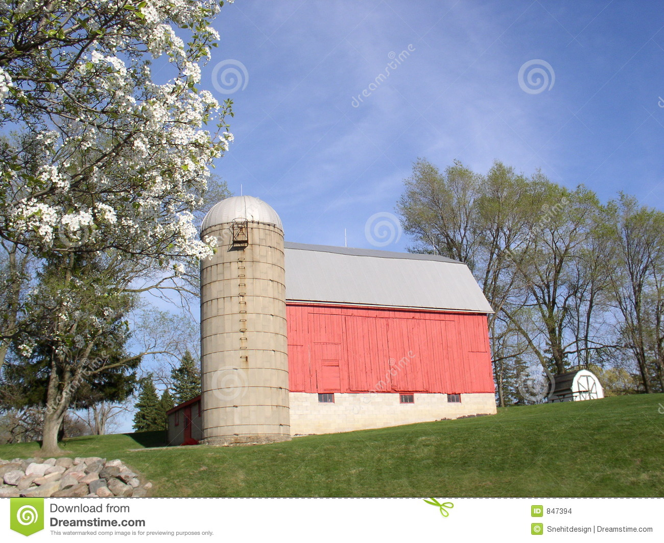 Cow on green pasture with red barn with grain silo royalty free stock - Royalty Free Stock Photo Barn Blue Countryside Grain Red Silo