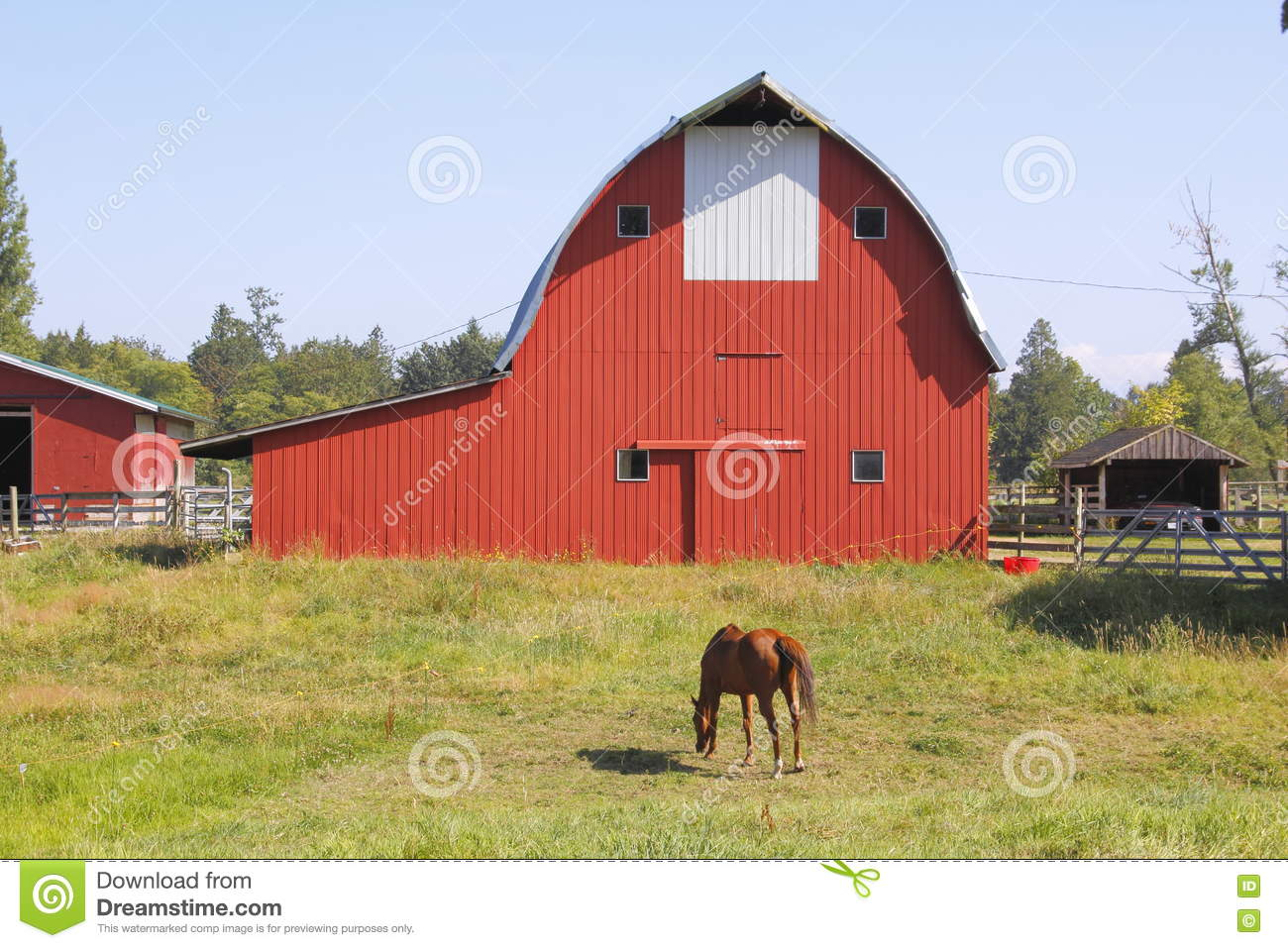 Red Barn and Horse Grazing