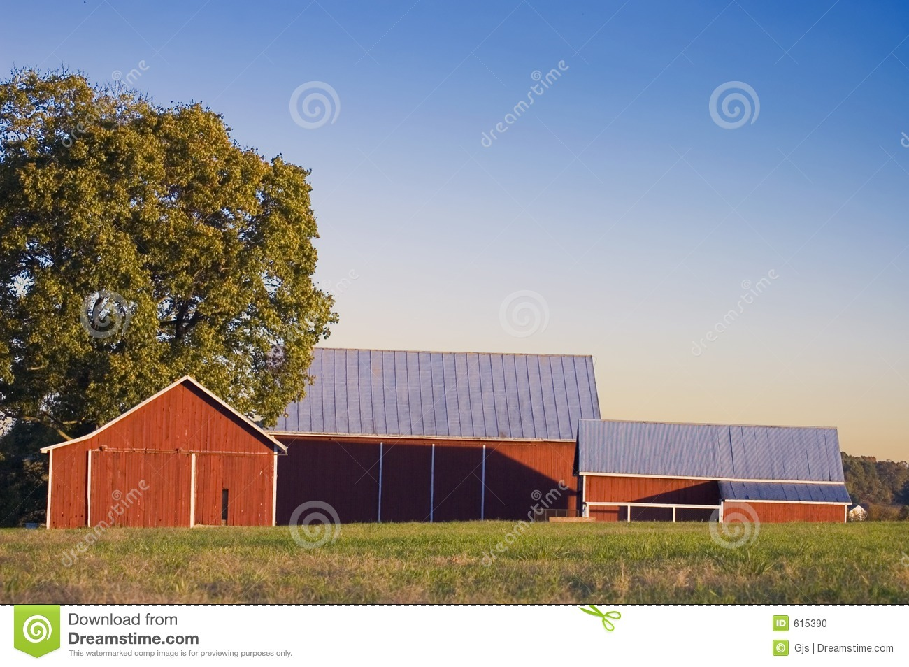 Cow on green pasture with red barn with grain silo royalty free stock - Royalty Free Stock Photo Barn Pasture Red