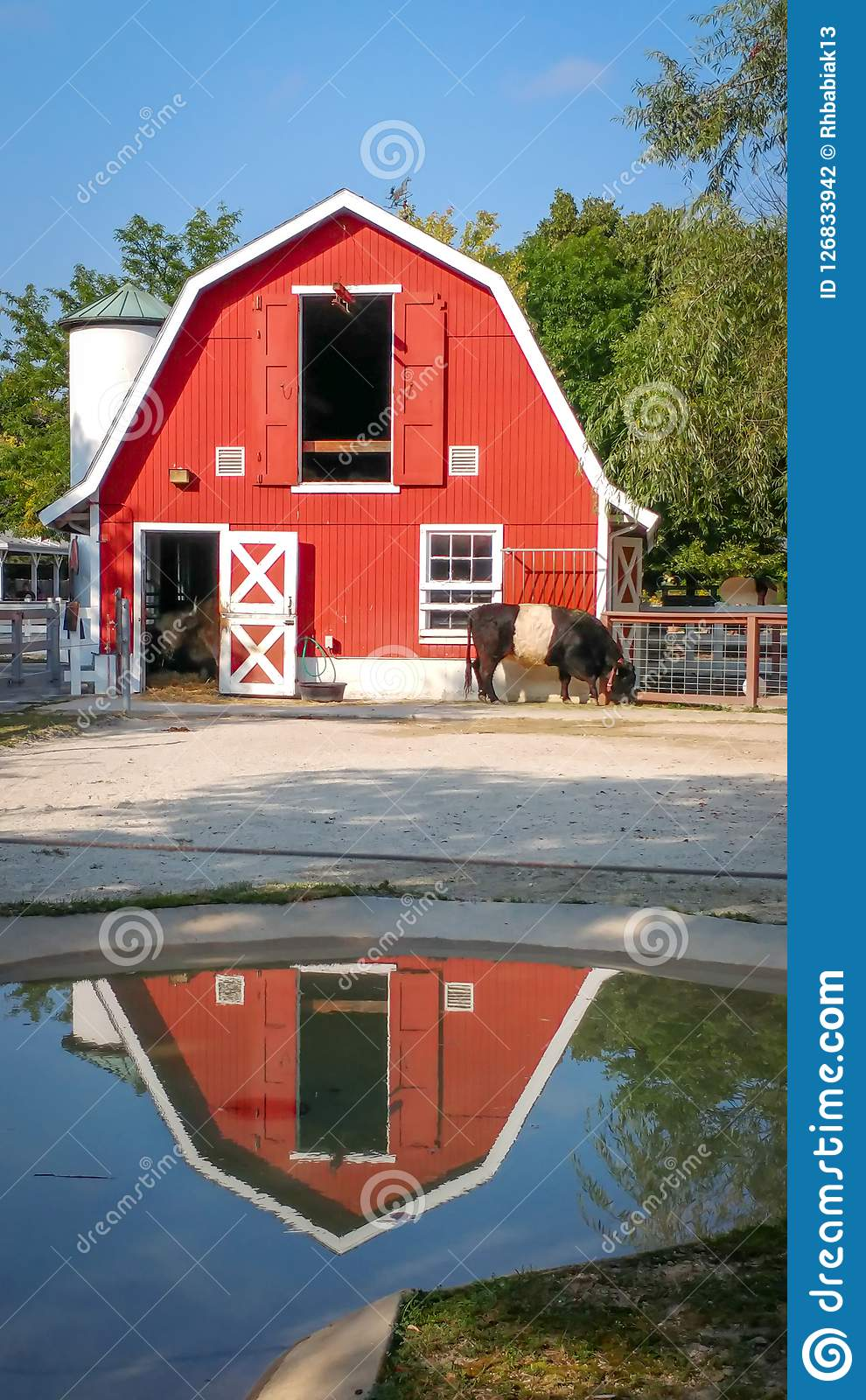 Red Barn Reflected in Rain Puddle