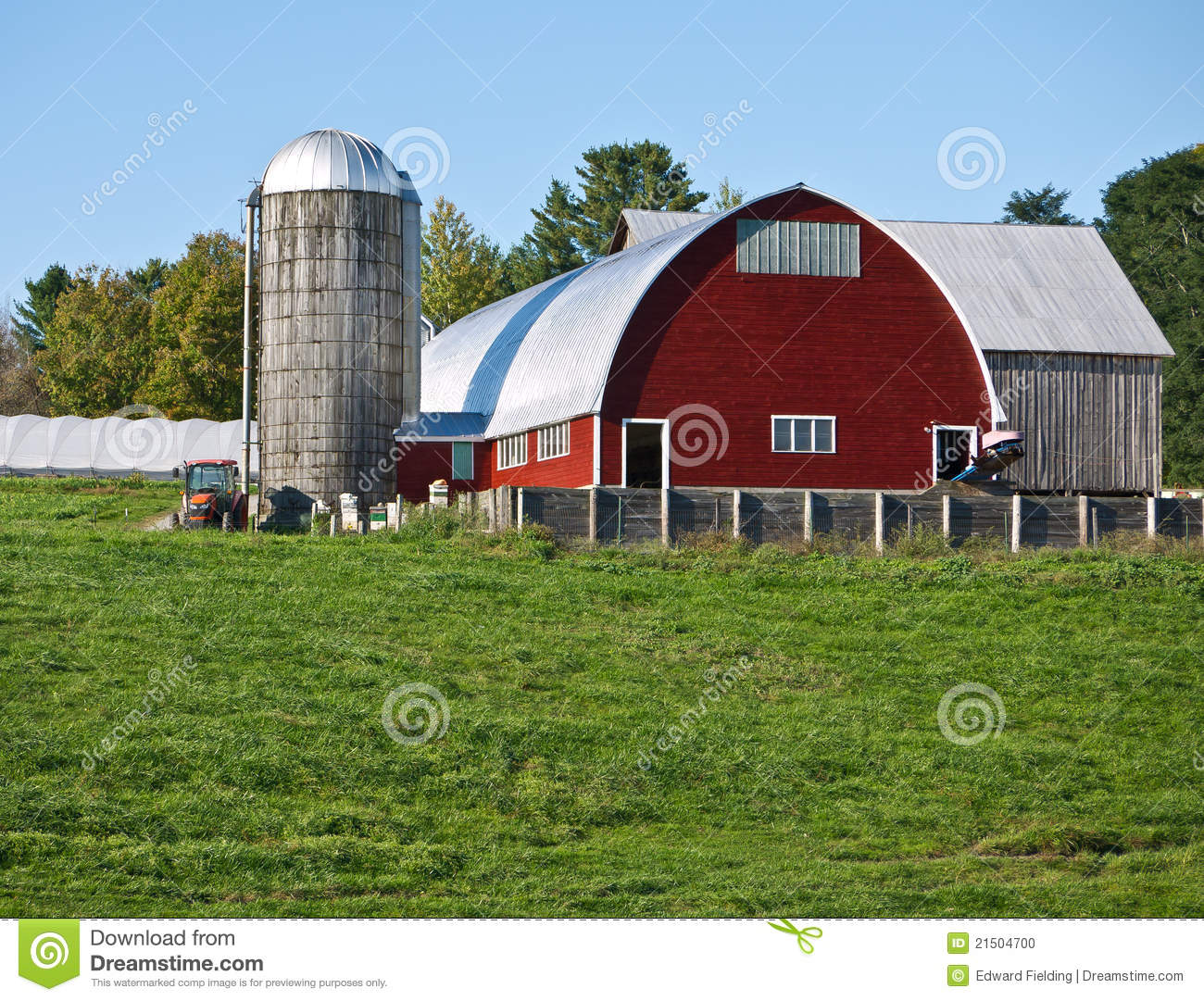 Cow on green pasture with red barn with grain silo royalty free stock - Royalty Free Stock Photo Barn Farm Red Silo