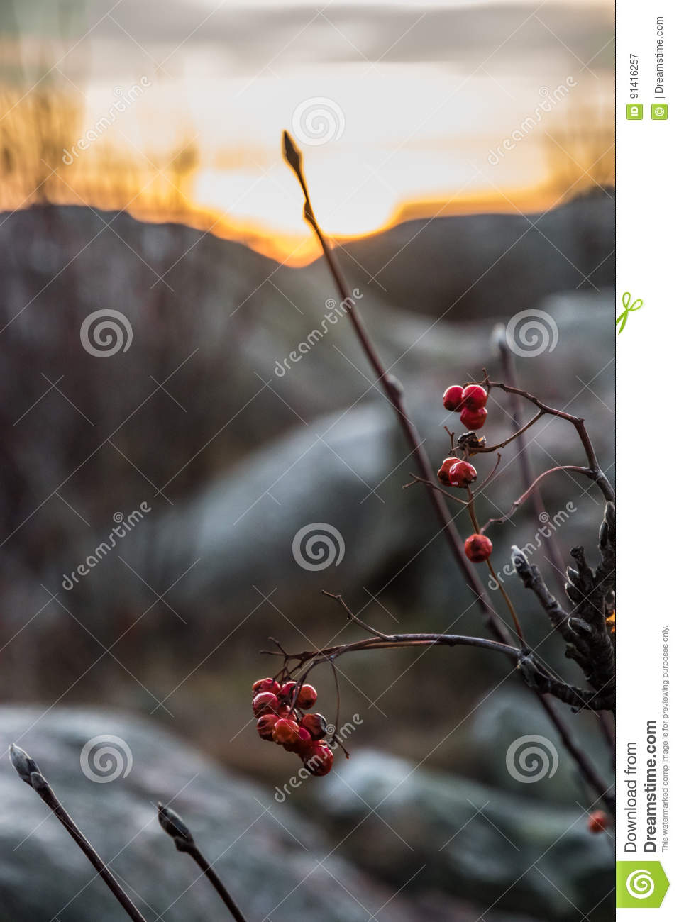 Red berries in front of sunset scenery orange with big rocks blu