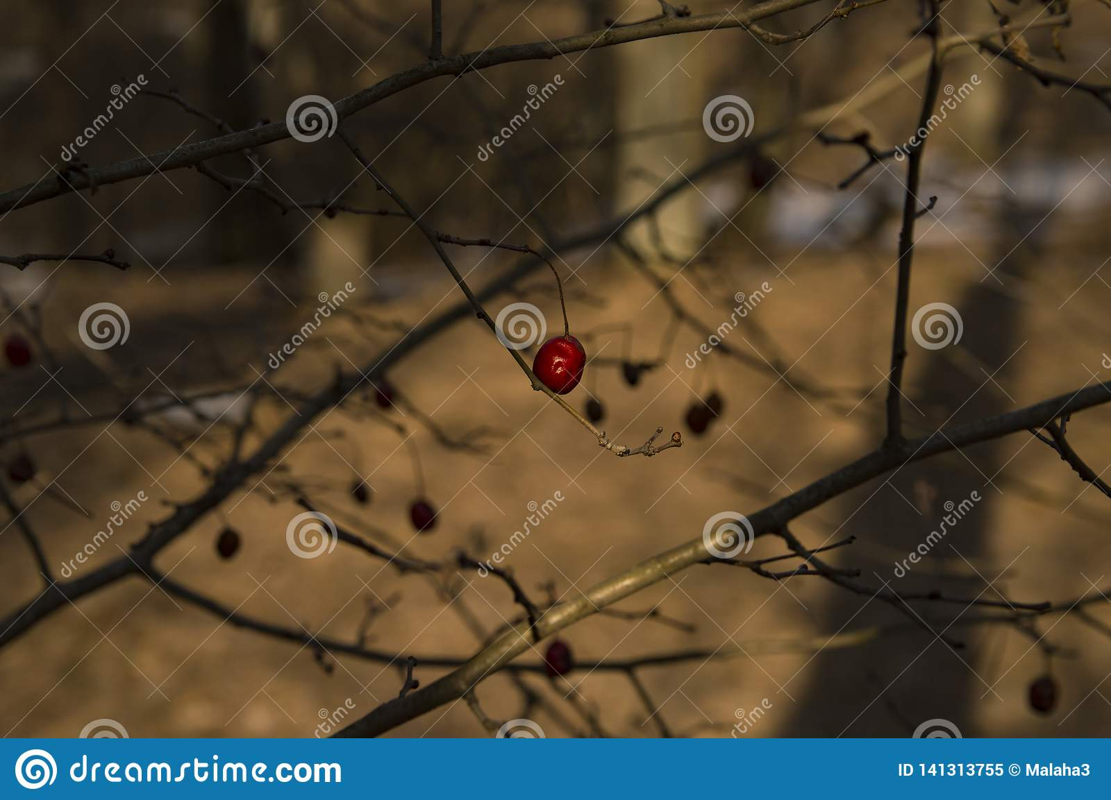 Red berry on a tree in the winter forest