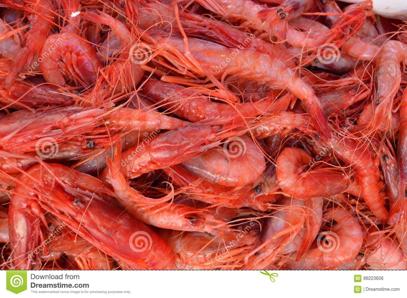 Red Big King Shrimps Prawns In Fish Market Selling In Turkey