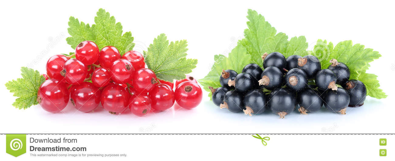 Red and black currant currants berries fruits fruit isolated