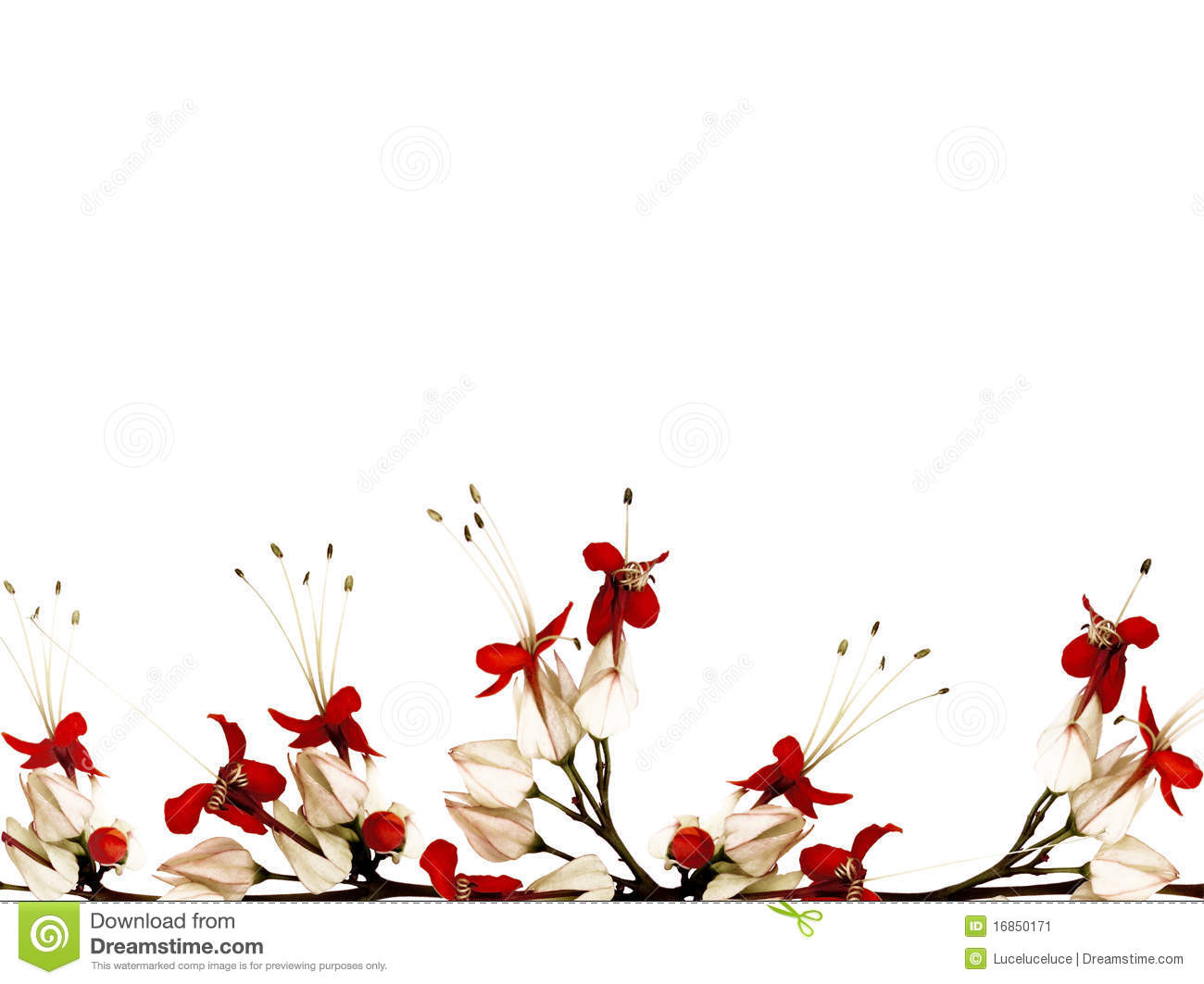 red black and white butterfly flower stock illustration