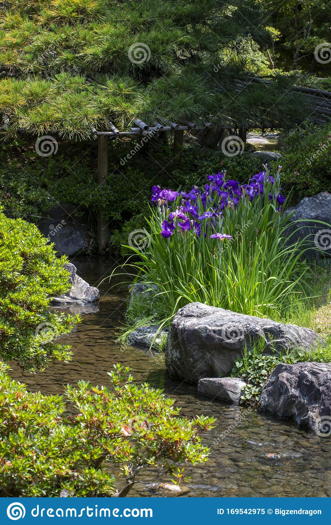 Red Blooming Irises Near Stream In Japanese Garden Stock Image Image Of Stream Deer 169542975