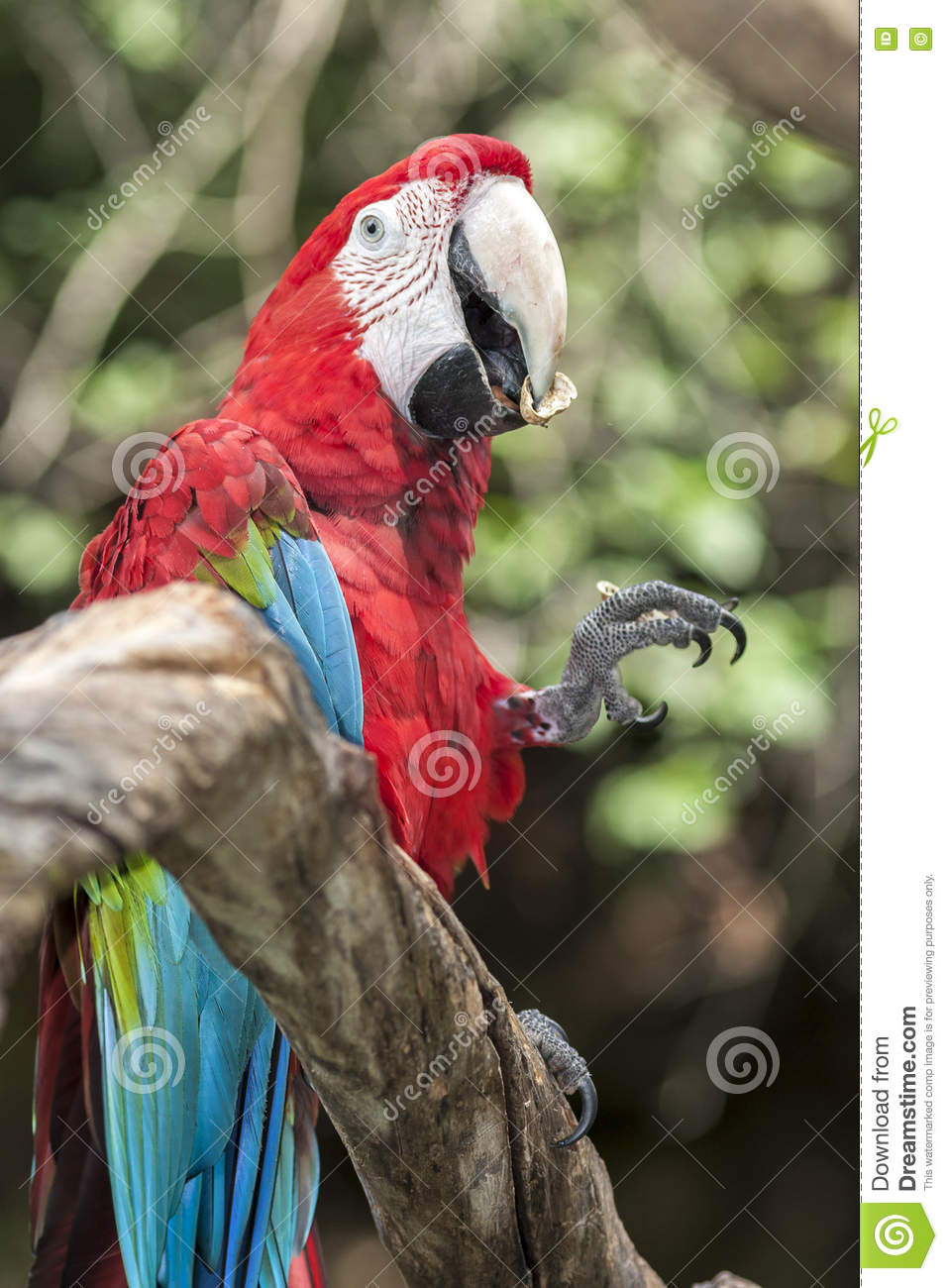 Red and Blue Parrot Sitting on Branch