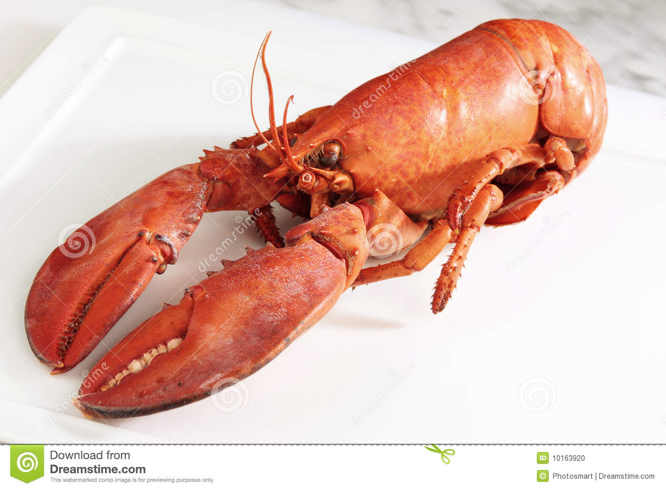 Red Boiled Lobster Stock Photo - Image: 10163920