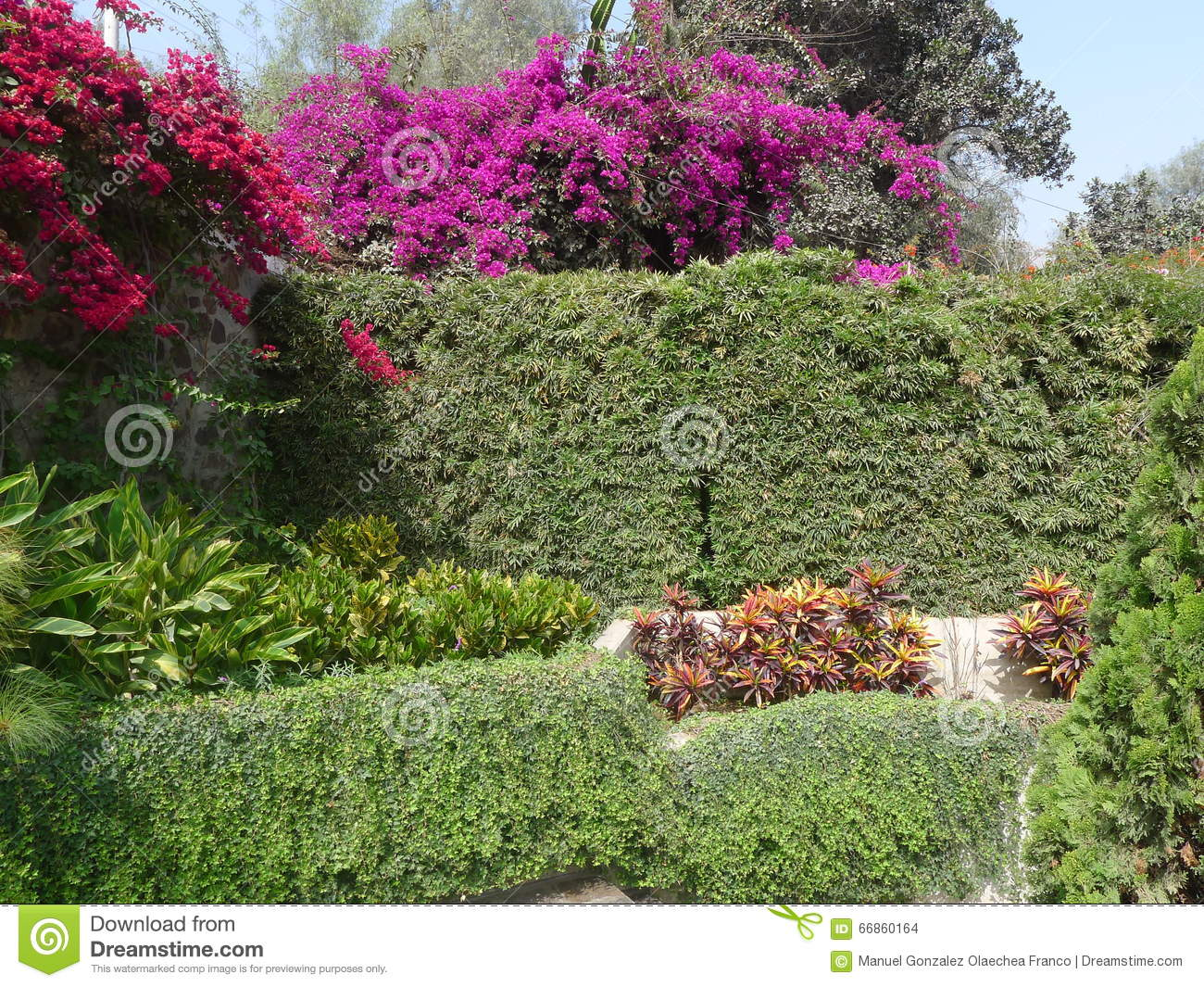 Red Bougainvilleas Over A Plant And Stone Walls In Lima Stock Photo ...