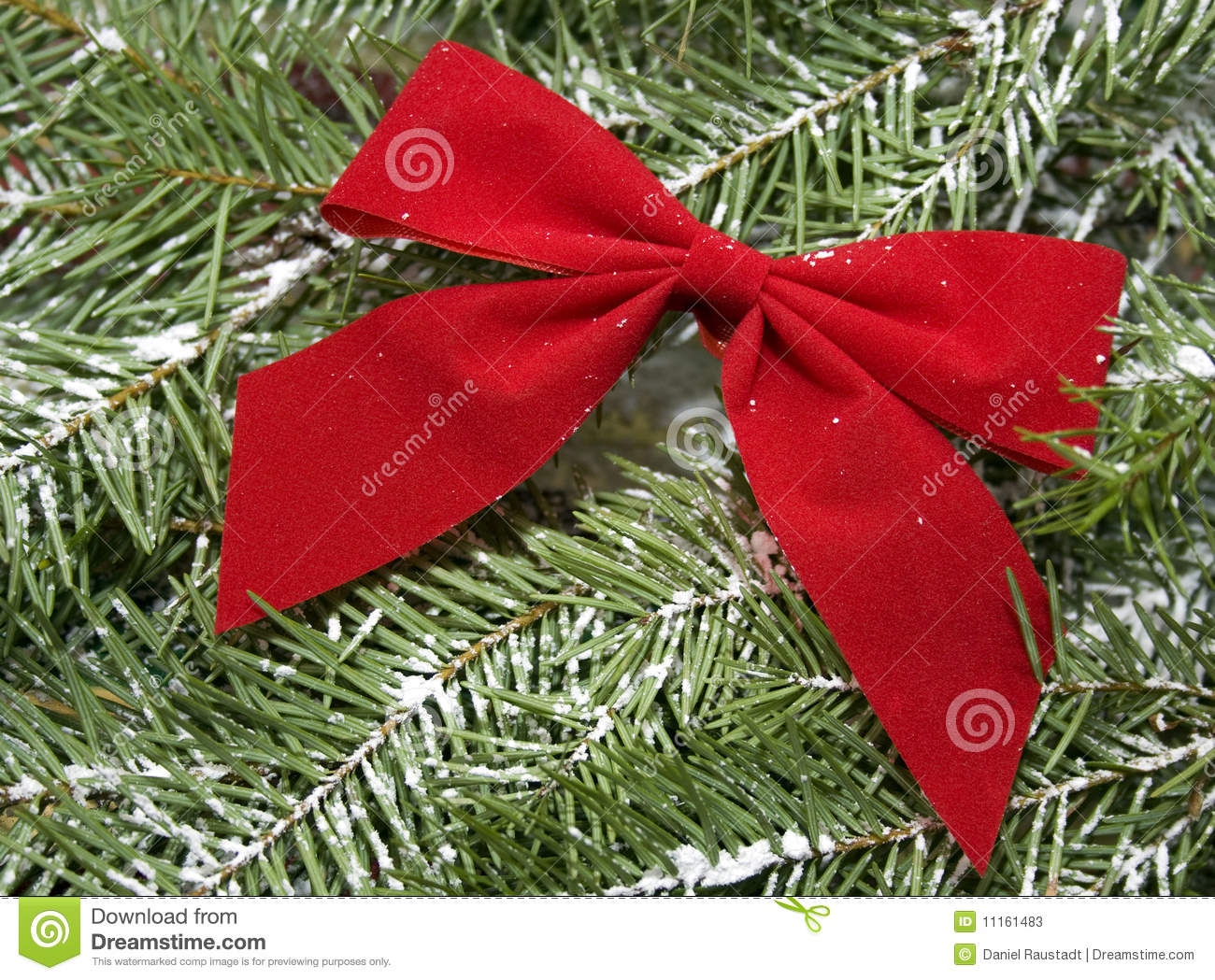 Christmas Tree Bows Red.Red Bow On Snow Covered Evergreen Christmas Tree Stock Image