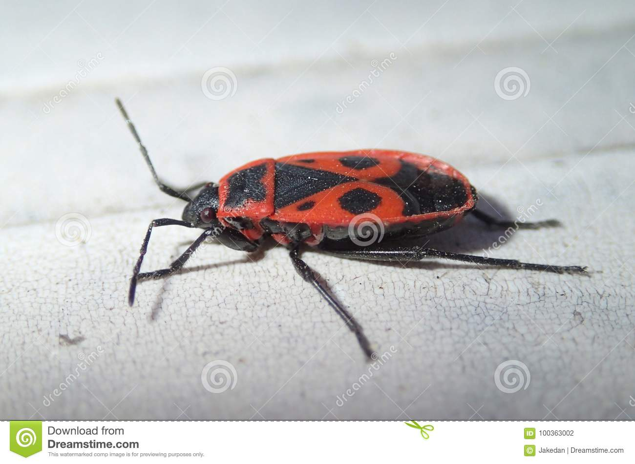 Red bug with dots