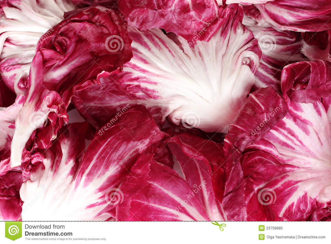 Red Cabbage Leaves Closeup Stock Photo - Image: 23758880
