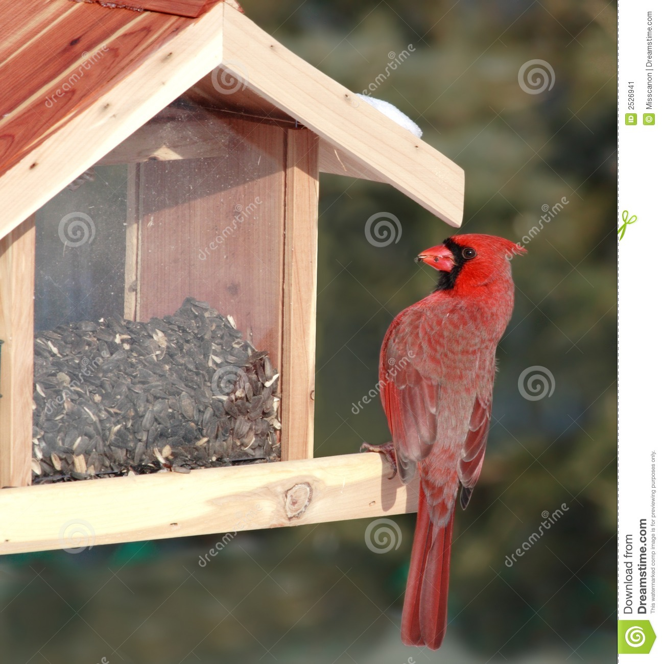 Cardinal Bird Feeder Plans Backyard Arbor