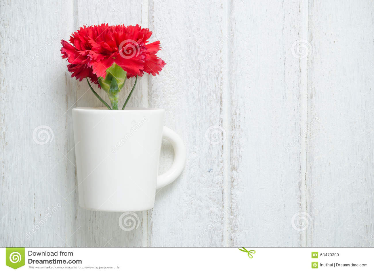 red carnation flower in a cup stock photo image of natural