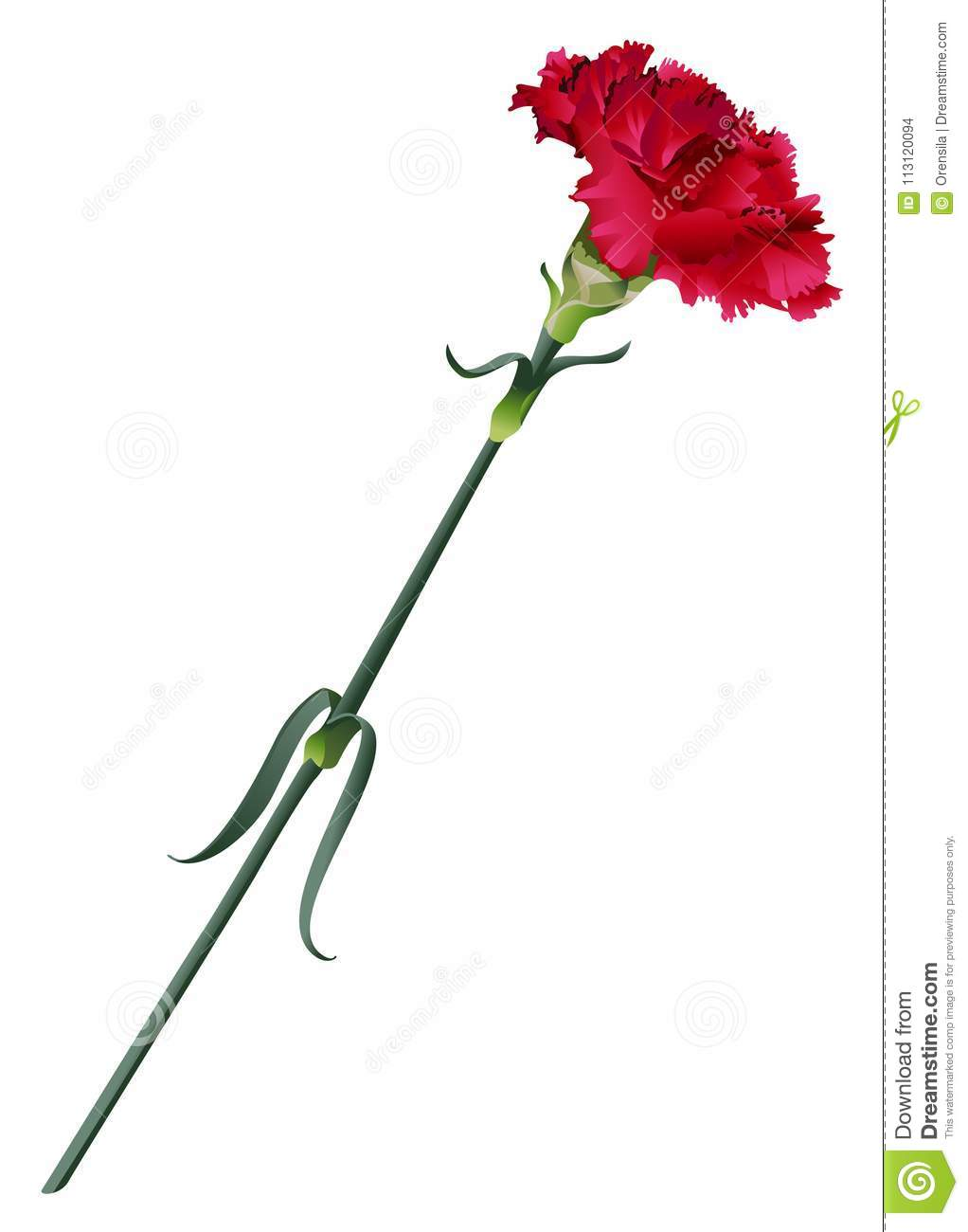Red Carnation Flower Vector Illustration Isolated On White Stock
