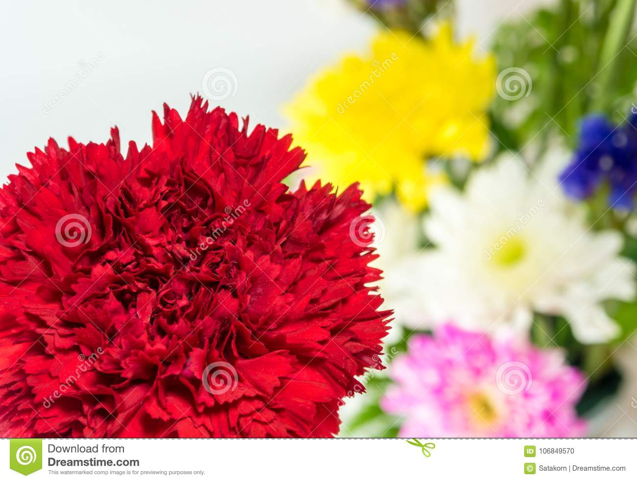Red Carnation And Chrysanthemum Background Stock Photo - Image of ...