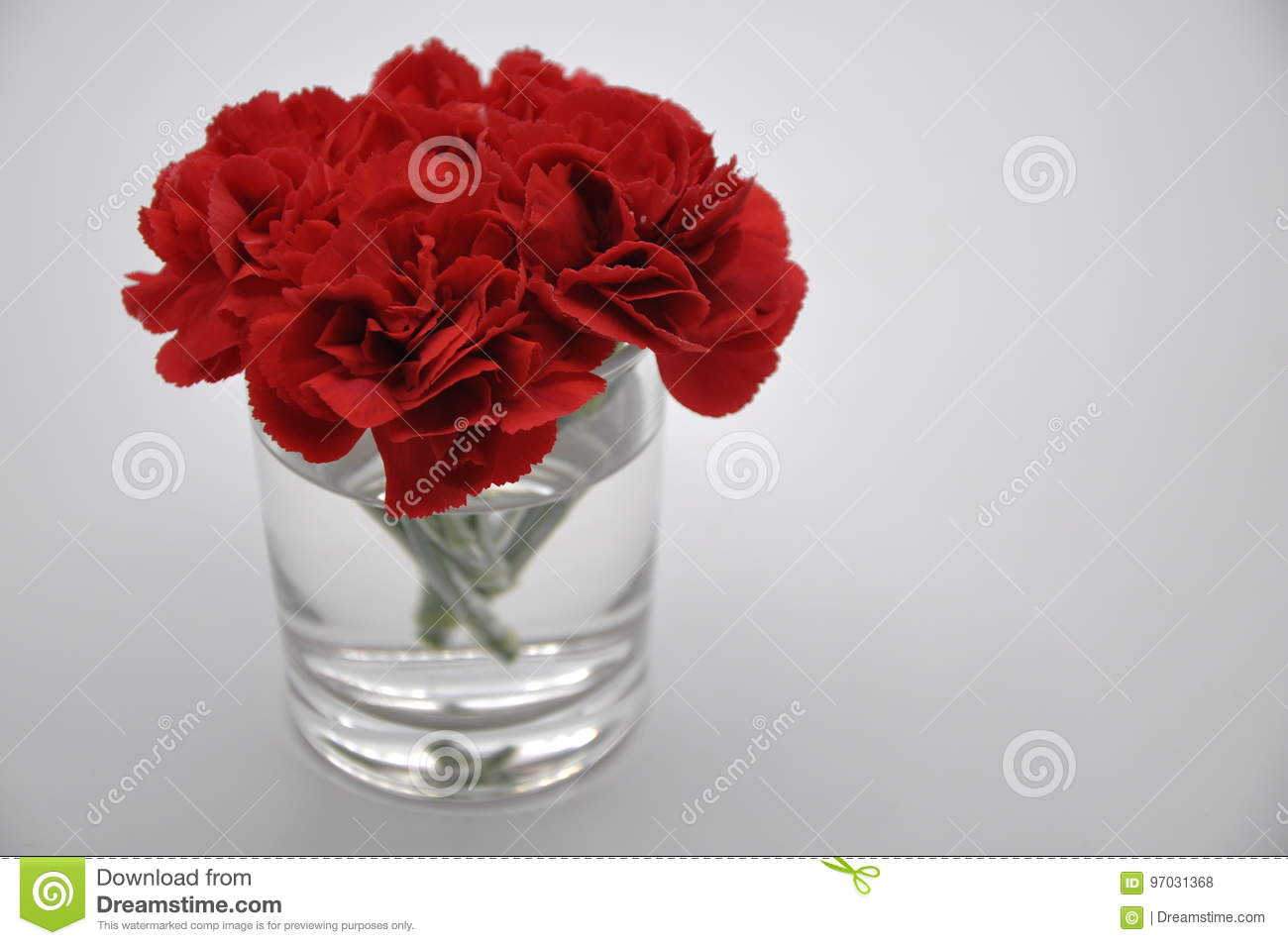 Red Carnation Red Flowers With White Background Dianthus