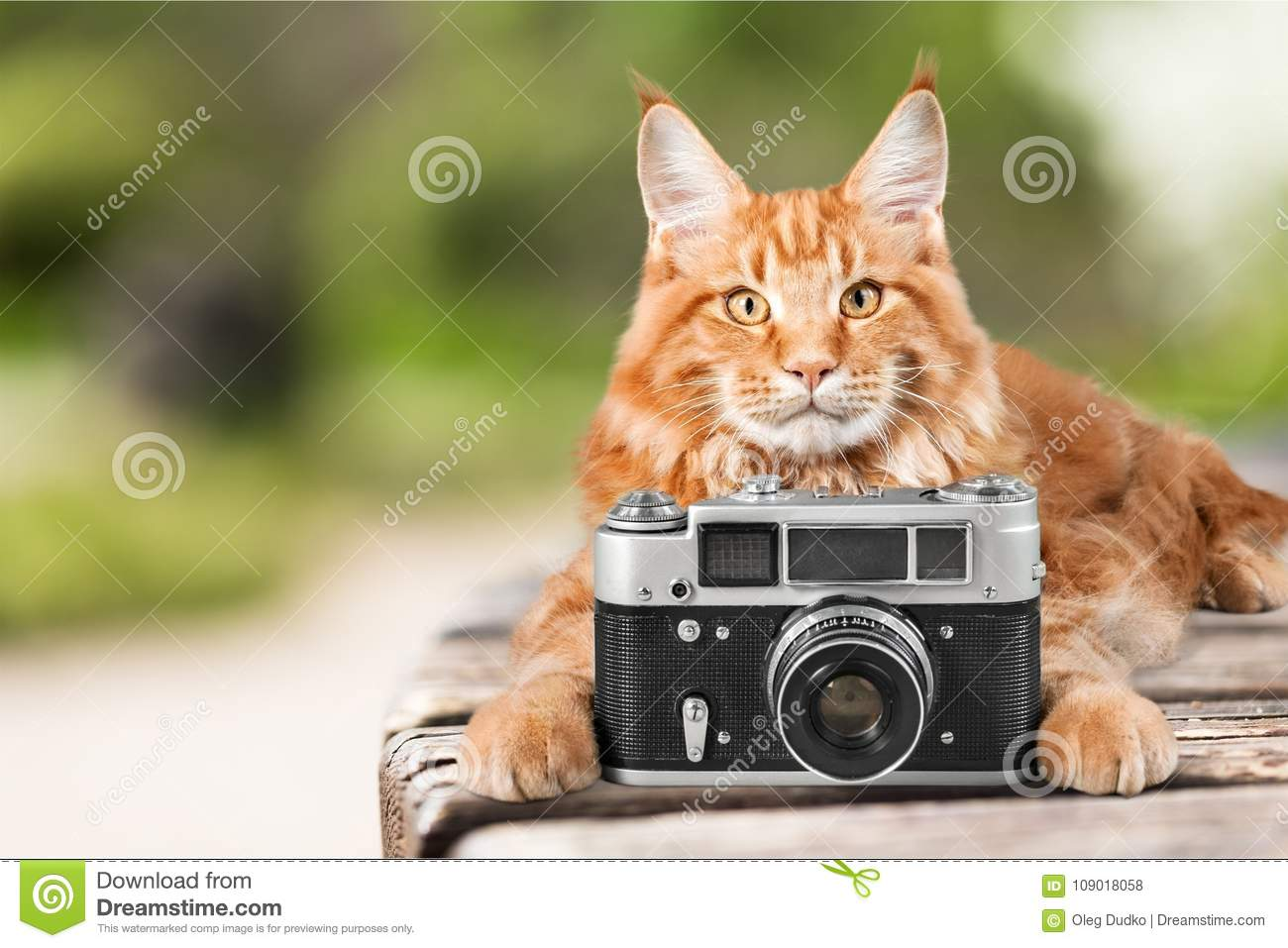 Adorable red cat with camera on light background