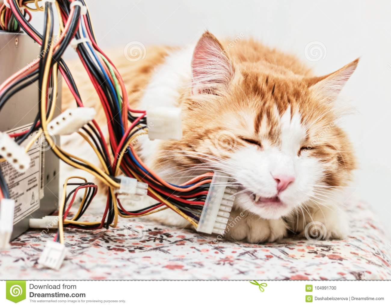 Red cat and computer wires stock photo. Image of adult - 104991700