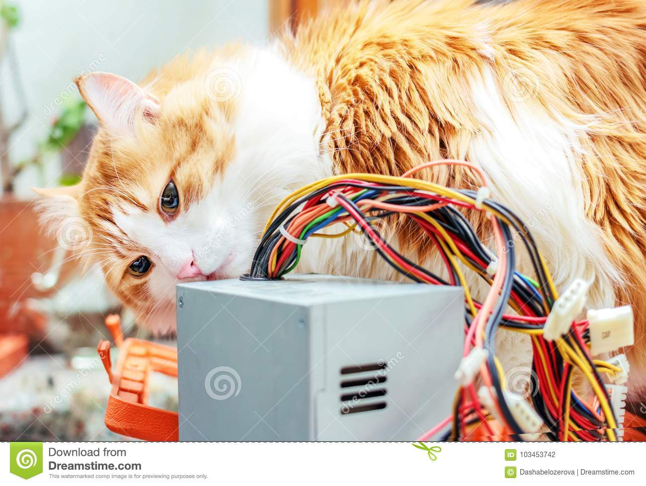 Red cat and computer wires stock photo. Image of communication ...