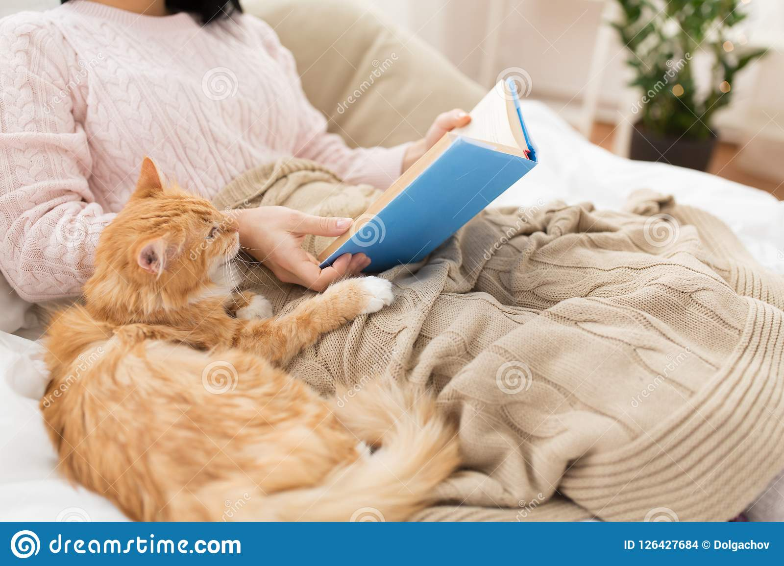 Red cat and female owner reading book at home