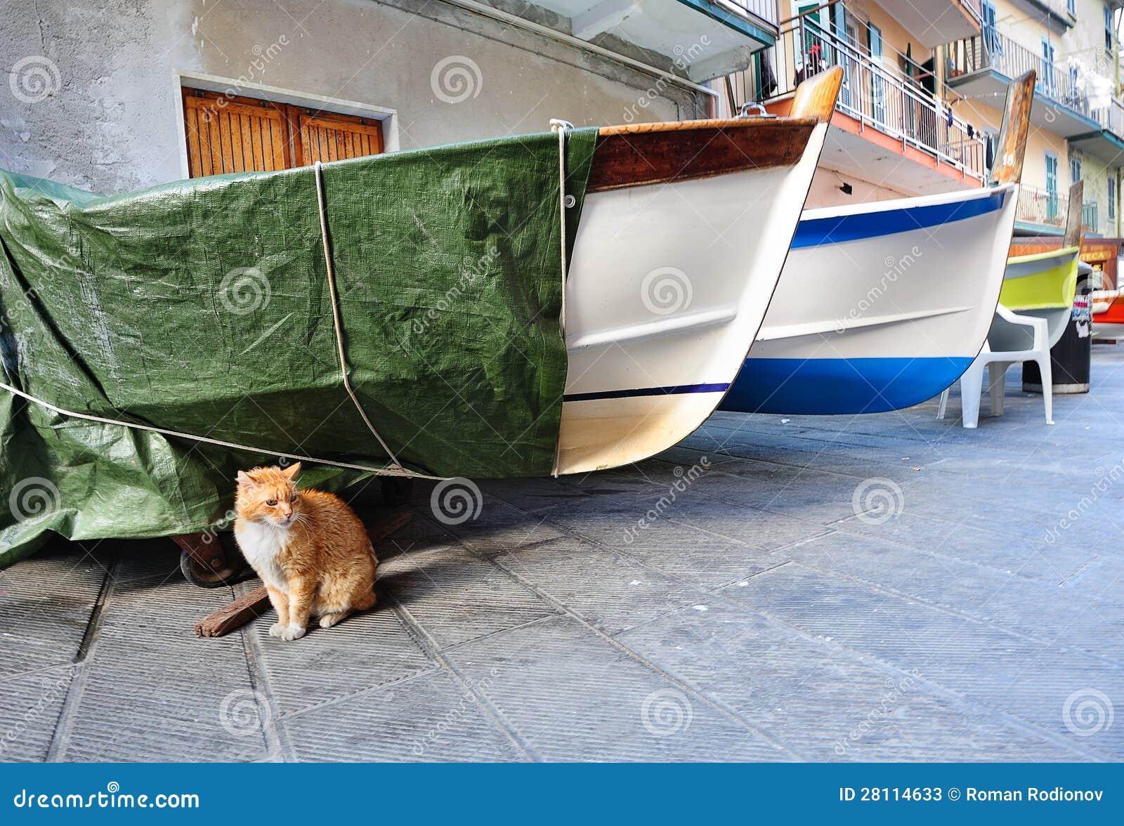 bow legged cat
