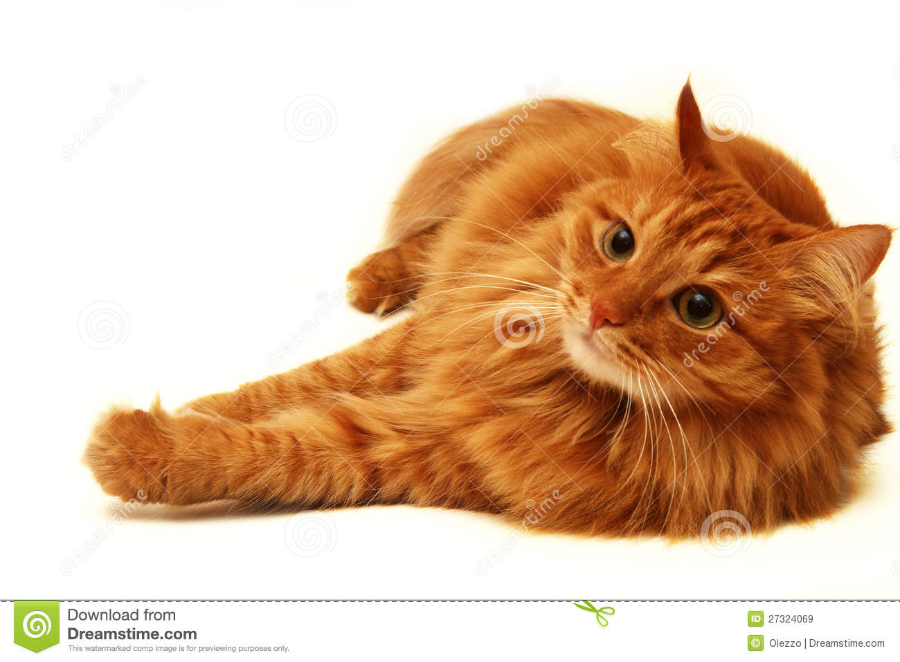 Red Cat Shot On A White Background Royalty Free Stock Images - Image ...
