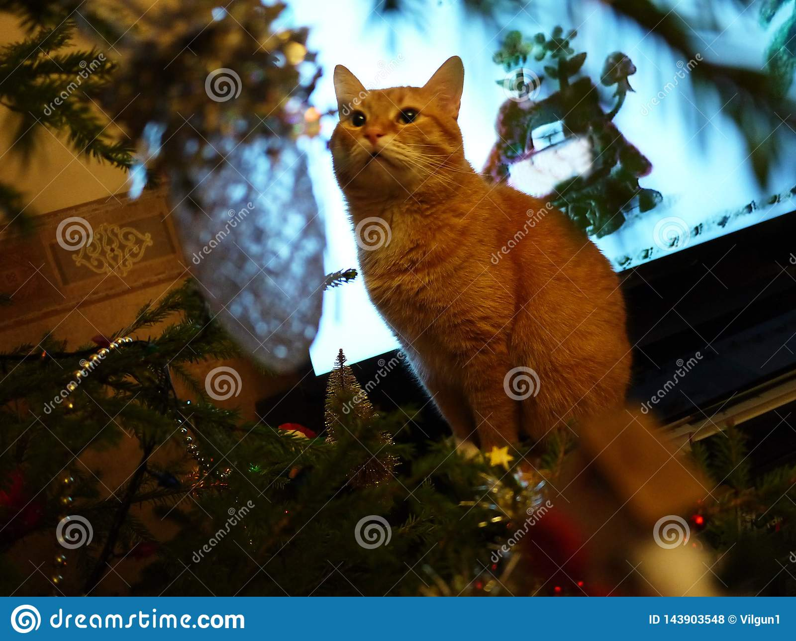 Red cat and tree. Beautiful cat next to the Christmas tree