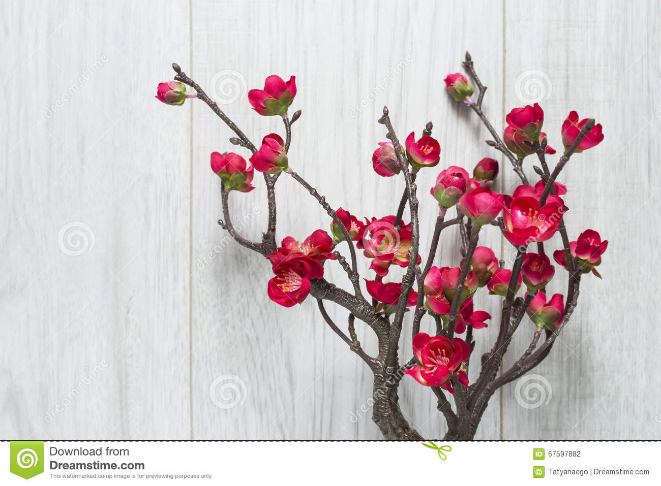 red cherry blossoms stock photo image of japanese board 67597882