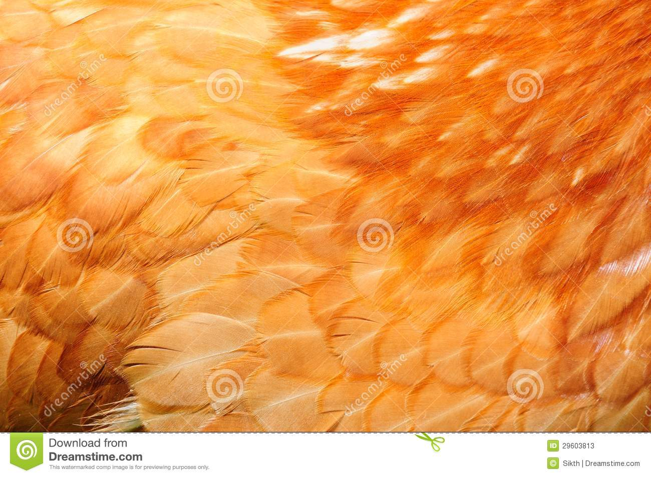 Red Chicken Feathers Close-Up Stock Photos - Image: 29603813