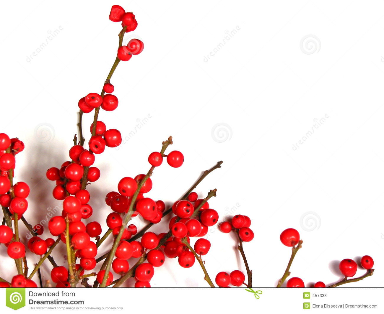 Red Christmas Berries On White 1 Royalty Free Stock Photos - Image ...