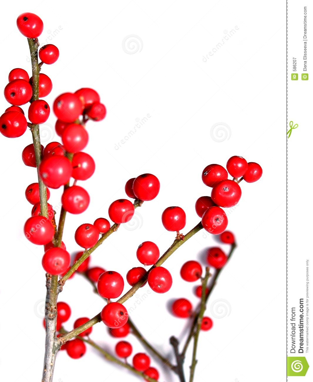 Red Berry Christmas Tree Decorations : Red christmas berries on white royalty free stock